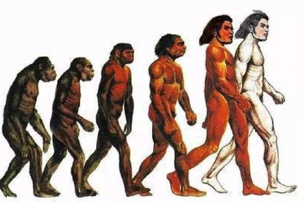 全世界最早的人类,南方古人猿人类光辉历史的转折点