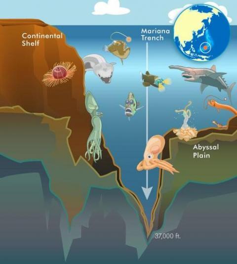 从海平面到最深处 大海可以有多深?