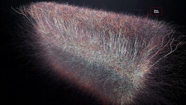 科学家称人类大脑有着惊人的860亿个神经元