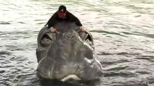 尼斯湖水怪之谜:水怪是真的吗?尼斯湖水怪真相曝光
