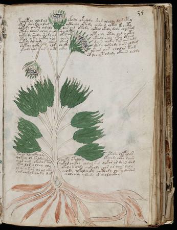 神秘天书《伏尼契手稿》被复印出售 限量898本约6万一本