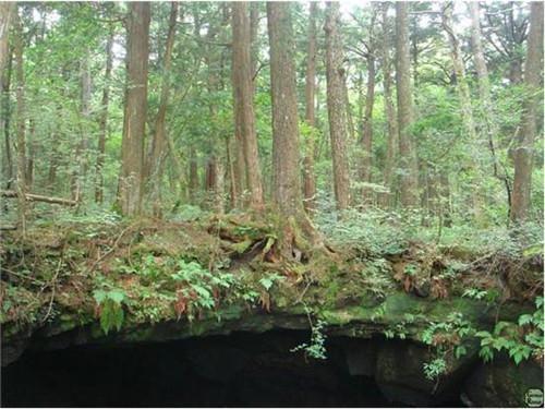 日本的恐怖杀人森林 每走20分钟就能遇到一具死尸