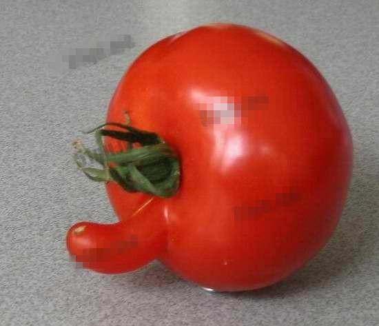 長相奇怪的蔬菜:那些長的像男生雞雞的蔬菜,18禁圖片!