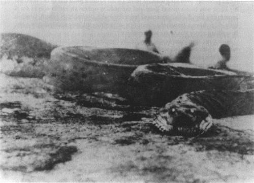 1936年江苏射阳发现巨蛇 昂起头比电线杆子还高