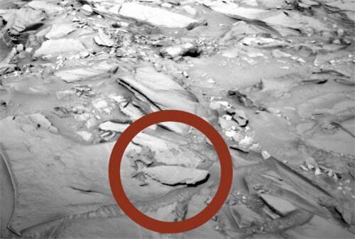 火星上再次被拍到鱼化石 难道火星上真的有生物吗