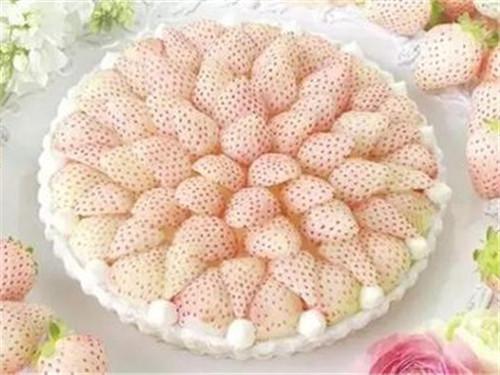 国外产出稀奇水果菠萝莓 传说中的白色草莓