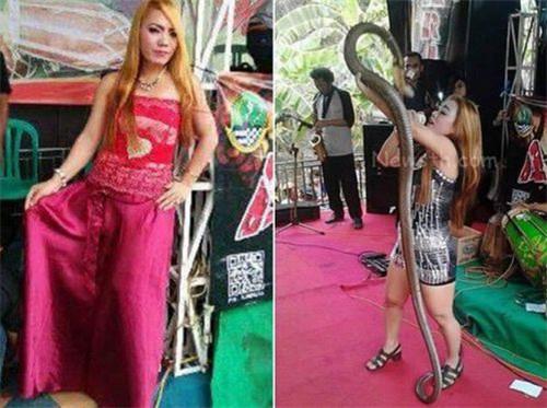 女歌手被眼镜蛇咬伤坚持演出死在台上 现场视频曝光