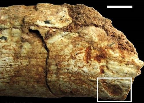 考古学家发现50万年前被动物咬死的人类的骨头