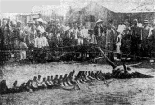 营口坠龙事件是真的吗 揭开1934年营口坠龙事件真相