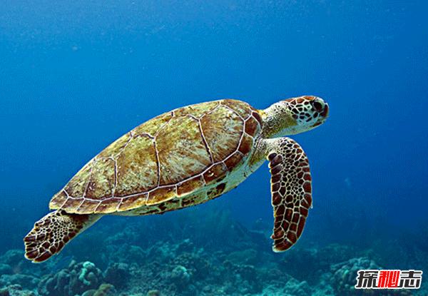 海龟为什么会流泪?海龟的十大特点和特殊本领