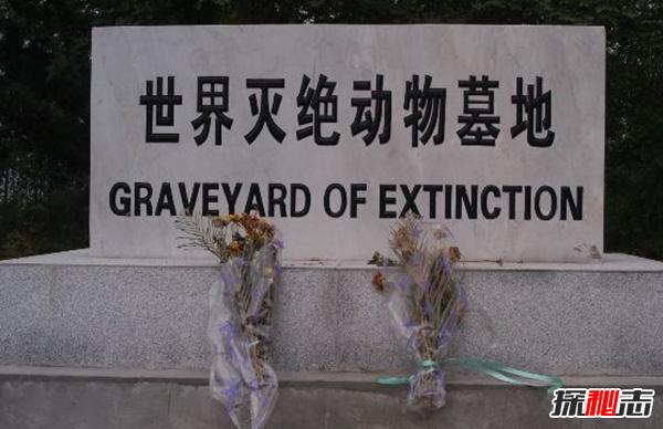 世界已灭绝的十大动物 第二牙齿长五米,第四厄运象征