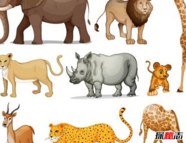 世界上人气最高的十种动物 你能猜中几种?(附图)