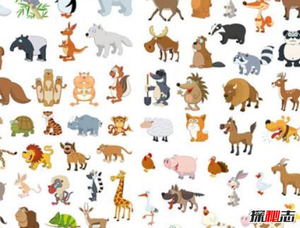 世界上最灵活的10种动物 猎豹仅排第五,第一极难猜到