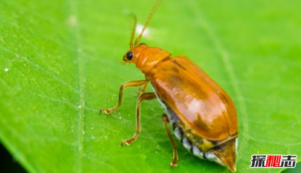 世界上10大最臭动物排名 臭虫仅排第四,第十可臭死一人