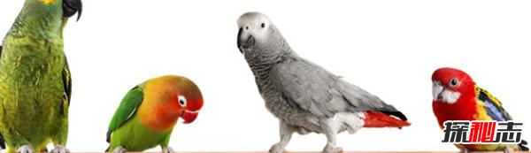 鸟类为什么濒临灭绝?关于鸟类的十大趣味知识