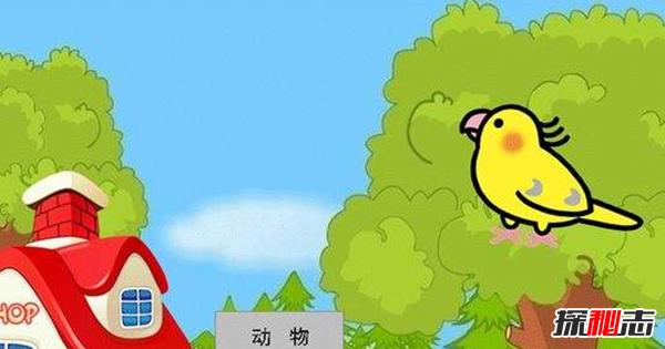 说话能力最强的10种鸟 第二能记住约1700个单词