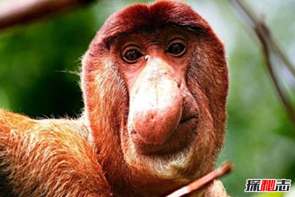 世界十大最丑的动物 丑到让人反胃(吃不下饭)