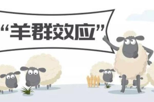 羊群效应生活中的例子有哪些?羊群效应告诉我们什么道理