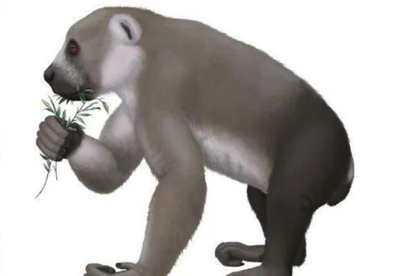 古原狐猴:一种已经灭绝1500年的狐猴(外形和树懒酷似)