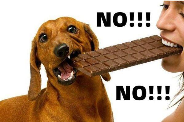 狗狗为什么不能吃巧克力葡萄?剂量过多会引起食物中毒