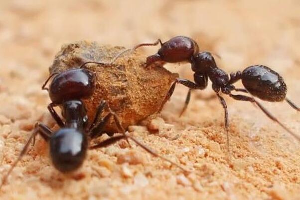 蚂蚁知道人类的存在吗 对于蚂蚁来说人是一堵会移动的墙