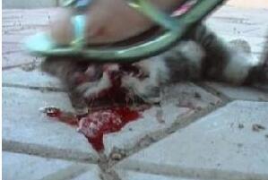 高跟鞋虐猫事件视频,实则商家为获利故意虐猫致死