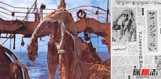 日本1977年海怪尸体事件,海怪真实图片曝光真恐怖