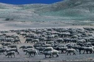 大自然动物迁移之谜,动物为什么会迁移(自然灾害/视频)