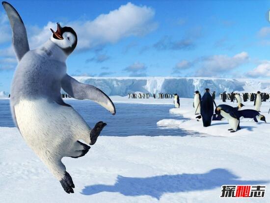 南极企鹅识途之谜,自身具备独特导航本领(超能力/无解)