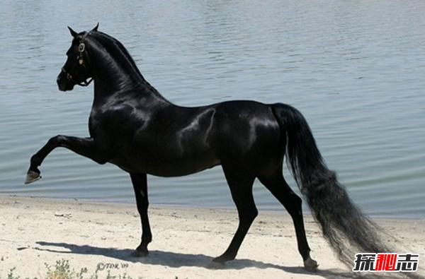 世界上10大最贵的宠物 阿拉伯马上榜,第一高达150万美元