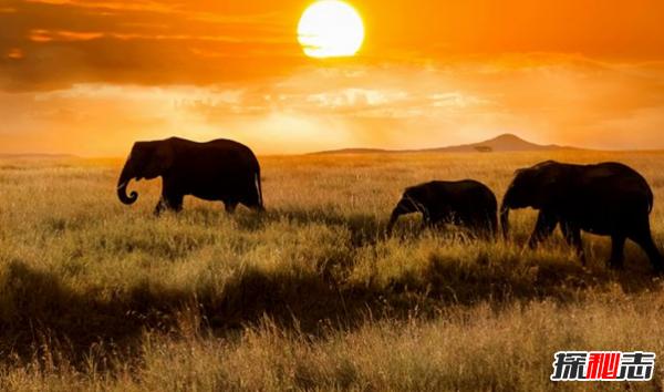 非洲哪些地方好玩?非洲最值得去的十大地方(附图)