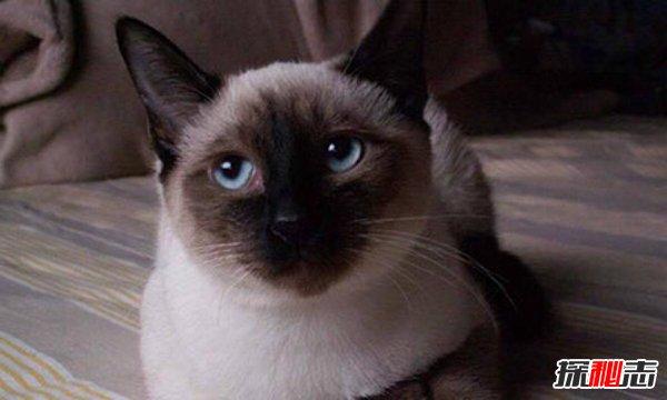 养猫一个月花多少钱图片
