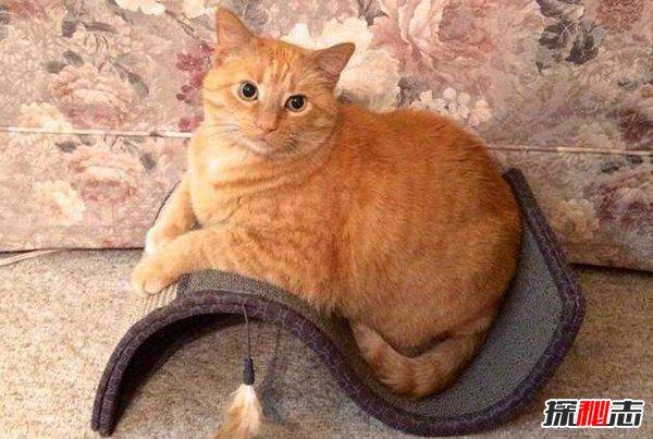 第一次养猫养什么品种?这五种最好不要碰,新手必看!