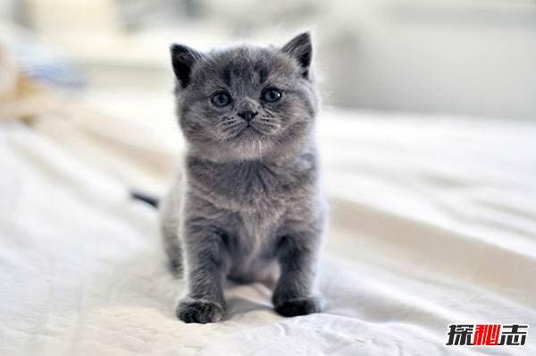 什么猫适合新手女生养图片