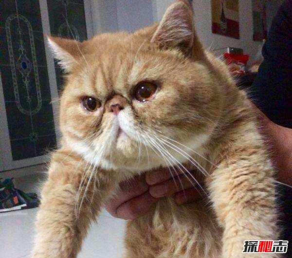 宠物猫的品种及价格图片