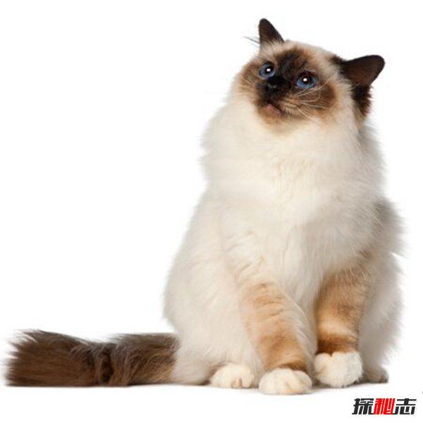 养猫的诡异禁忌图片