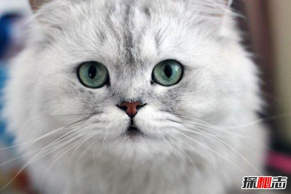 十大新手最好养的猫图片