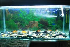 怎麼治(zhi)魚缸水白(bai)霧小妙招?為(wei)什麼魚缸會變渾濁