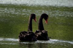綠天鵝是什麼意思(si) 自然災害頻發(或將引發下(xia)次(ci)經濟(ji)危機)