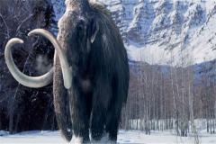 最(zui)大的猛 象叫什麼象?比亞洲(zhou)象大三倍(重達12噸)
