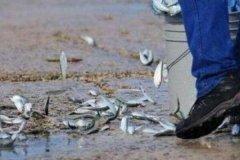 空中降鱼是真实的自然现象吗?因龙卷风席卷(鱼从天而降)
