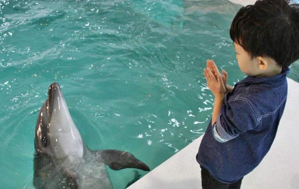 海豚为什么不睡觉:睡眠很特殊,两个大脑轮流休息