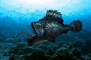 其丑无比的深海安康鱼,头顶自带发光器(味道鲜美无比)
