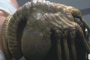 异常血腥的抱脸虫让人作呕,被抱脸虫抱过的脸图片