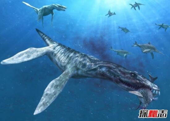 世界上最大海生爬行动物克柔龙,灭绝千年竟死而复生