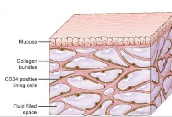 科学家发现新器官在哪里 新器官的功能和作用是什么