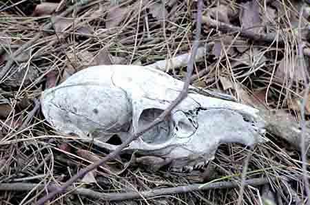 地球十大神秘禁区:第四个是动物坟墓,中国四地上榜(图8)