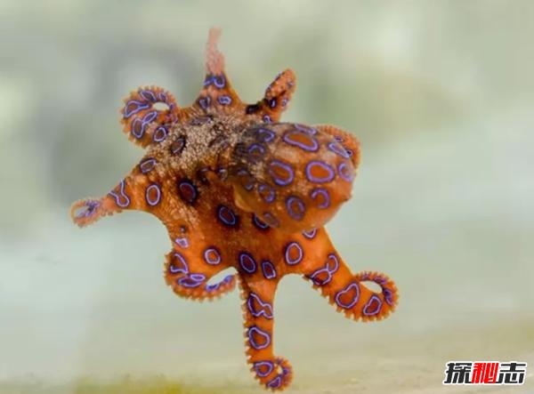 外表美丽却有毒的十大动物 火蝾螈上榜,第一咬一口就能致命