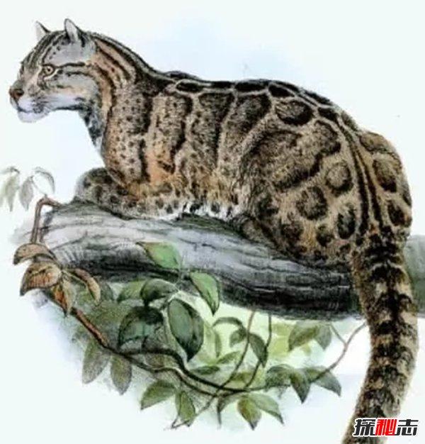 什么物种灭绝了?盘点地球已经消失的10大物种(痛心)