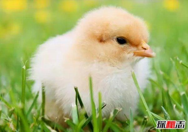 最受人们欢迎的十种小动物 快来看看你都养过没